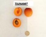 Spring Blush® - Tsunami® - Banzaï®