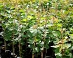 plant-en-pot-2