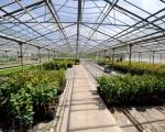 serre-acclimatation-plant