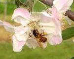 fleurs-juliet-2