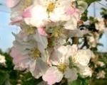 fleurs-juliet-3